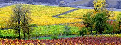 Vineyard Digital Art - Harvest Time by Margaret Hood
