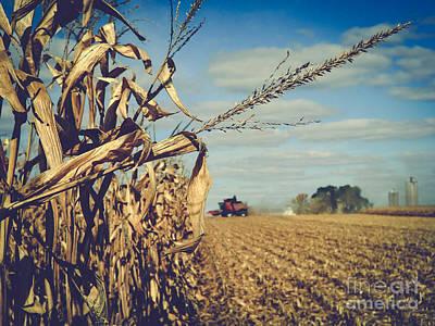 Photograph - Harvest Time by Viviana  Nadowski