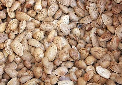 Photograph - Harvested Almonds by Tracey Harrington-Simpson