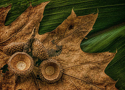 Photograph - Harvested by Phyllis Meinke