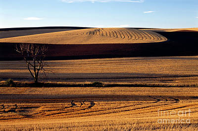 Photograph - Harvested Wheat Field by Jim Corwin