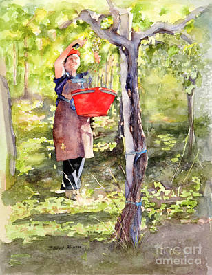 Grapevines Painting - Harvesting Anna's Grapes by Bonnie Rinier