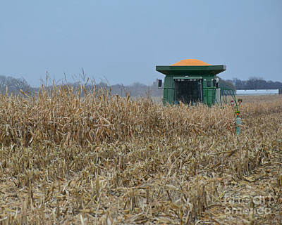 Photograph - Harvesting Corn by Kathy M Krause