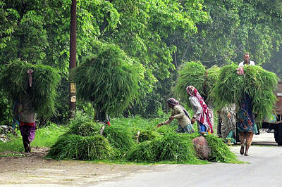 Photograph - Harvesting Hay - India by Kim Bemis