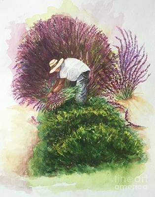 Painting - Harvesting Lavender by Lucia Grilletto