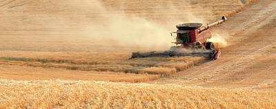 Jerry Sodorff Royalty-Free and Rights-Managed Images - Harvesting Wheat 1336 by Jerry Sodorff