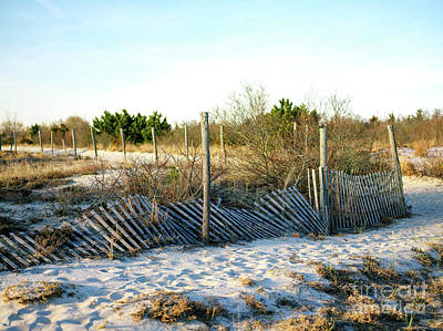 Photograph - Harvey Cedars Dunes by John Rizzuto