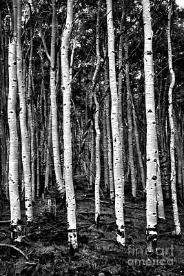 Photograph - Haunted Aspens by John Stephens