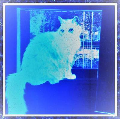 Photograph - Haunted By The Cat by Denise Fulmer
