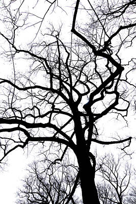 Photograph - Haunted Dark Tree by Cate Franklyn