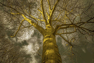 Photograph - Haunted Moon Light Tree by Bruce Pritchett