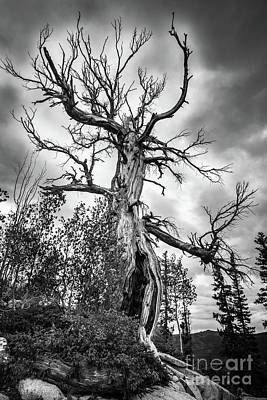 Photograph - Haunted Old Tree In The Forest - Halloween by Gary Whitton
