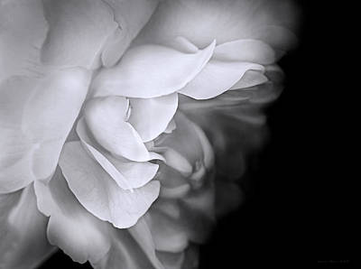 Photograph - Haunting Beauty Monochrome Rose by Jennie Marie Schell