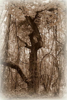 Photograph - Haunting by Beth Vincent