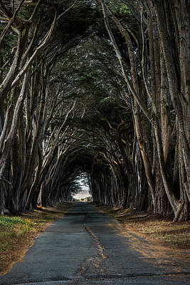 Point Reyes Photograph - Haunting by Jon Glaser