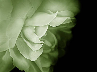 Photograph - Haunting Rose Flower Green by Jennie Marie Schell