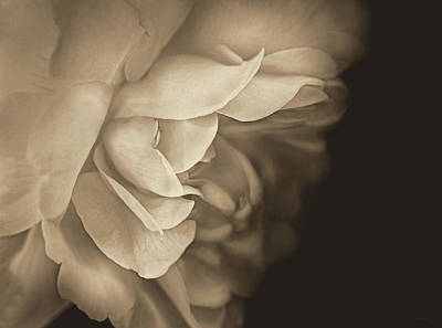 Photograph - Haunting Vintage Rose Flower by Jennie Marie Schell