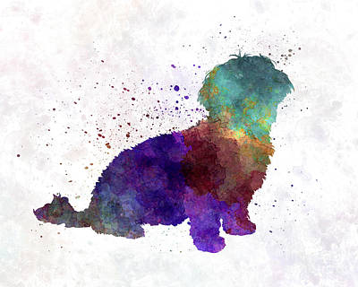 Havanese In Watercolor Art Print by Pablo Romero