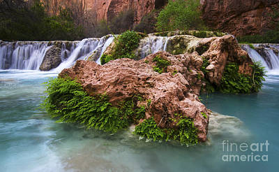 Photograph - Havasu Creek Grand Canyon 14 by Bob Christopher