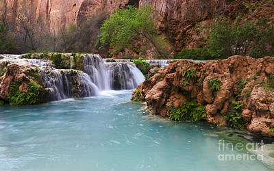 Photograph - Havasu Creek Grand Canyon 15 by Bob Christopher