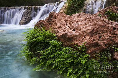 Photograph - Havasu Creek Grand Canyon 3 by Bob Christopher
