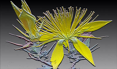 Relief Mixed Media - Have A Flower by Evelyn Patrick