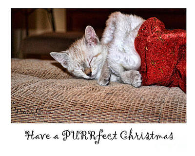 Photograph - Have A Purrfect Christmas by Traci Cottingham
