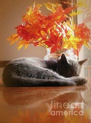 Photograph - Have A Restful Thanksgiving by Jennifer E Doll