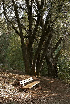 Photograph - Have A Seat With The Trees by Michele Myers