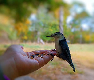 Photograph - Have A Seed by Lilia D