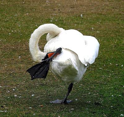 Photograph - Have An Itch by Diane Height