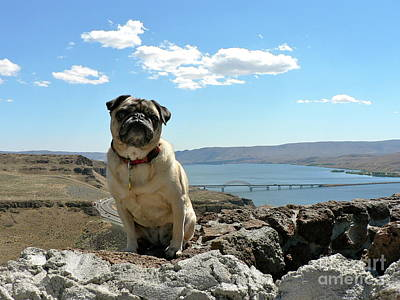 Photograph - Have Pug Will Travel by Jean Wright