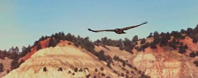 Photograph - Have You Never Seen A Hawk On The Wing by Amanda Smith