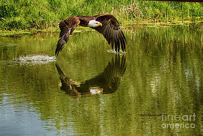 Photograph - Having A Dip by Jale Fancey