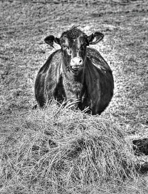 Photograph - Having A Hay Day by J Laughlin