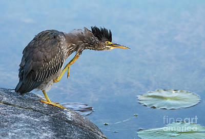 Photograph - Having An Itch.. by Nina Stavlund