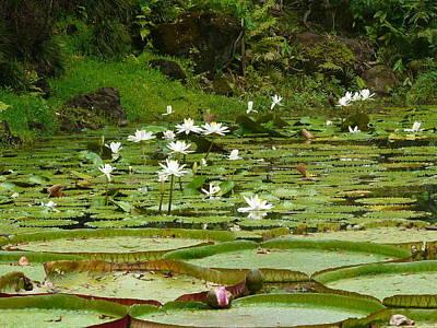 Iwa Photograph - Hawaii Hale'iwa Lilly Pond  by Hilda Hayson