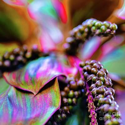 Photograph - Hawaii Plants And Flowers - Tropics by D Davila