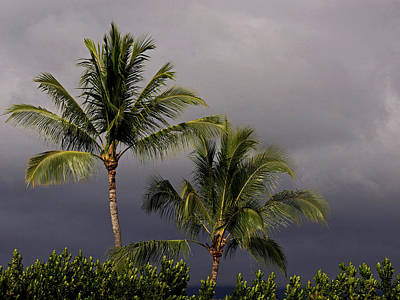 Photograph - Hawaii Storm - 365-264 by Inge Riis McDonald