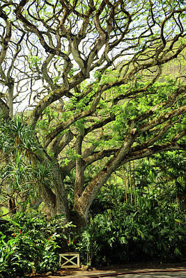 Photograph - Hawaii Tree-bard by Denise Moore