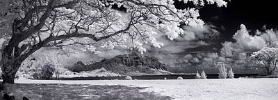 Infra-red Photograph - Hawaiian Blossoms by Sean Davey