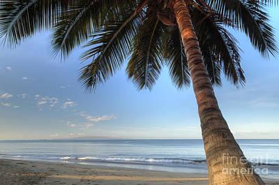 Coconut Photograph - Hawaiian Coconut Palm Sunrise 2 by Dustin K Ryan