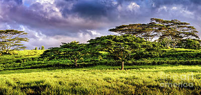 Photograph - Hawaiian Field At Sunrise by M G Whittingham