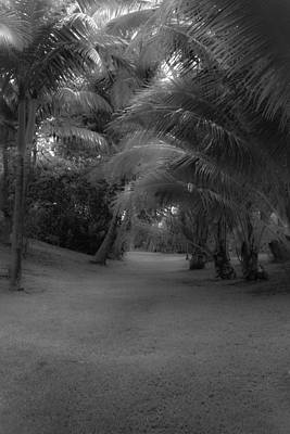 Photograph - Hawaiian Garden Bandw by Roger Mullenhour