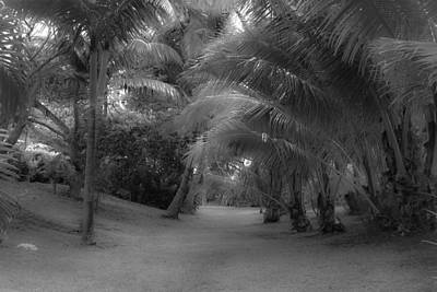Photograph - Hawaiian Garden Glow by Roger Mullenhour