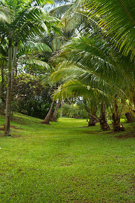Photograph - Hawaiian Garden by Roger Mullenhour