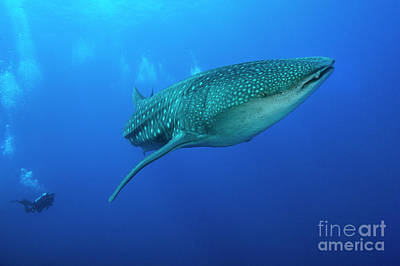 Photograph - Hawaiian Giant by Aaron Whittemore