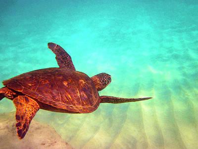 Hawaiian Honu Photograph - Hawaiian Green Sea Turtle by Bette Phelan
