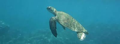 Hawaii Sea Turtle Mixed Media - Hawaiian Green Sea Turtle by Our Place Of Joy