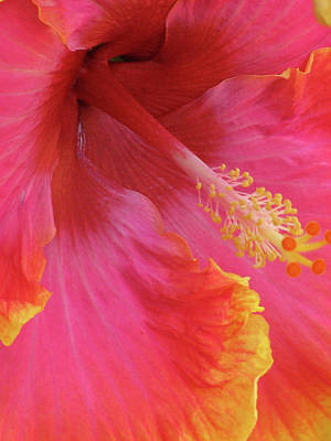Photograph - Hawaiian Hibiscus - Orange And Red 01 by Pamela Critchlow